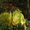 初めて見る植物