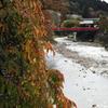 赤くなった葉と赤い橋