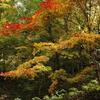 高山城跡の紅葉**