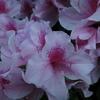 散歩途中のお花たち