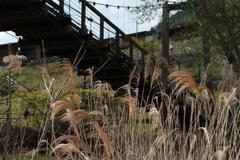 ススキと吊り橋