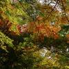 高山城跡の紅葉*