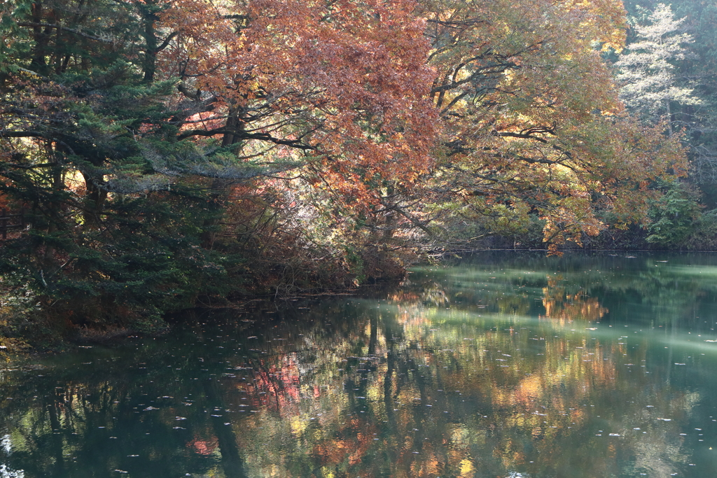 秋色の菖蒲池