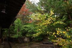 秋色なお蕎麦屋さんの庭先
