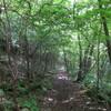 自然の中の道