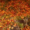地を彩る落ち葉