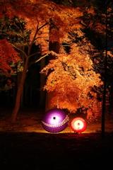 瑞巌寺のライトアップ