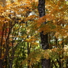 秋の色彩*