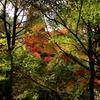 高山城跡の紅葉***