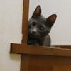 世界から猫が消えたならみたいなネコ