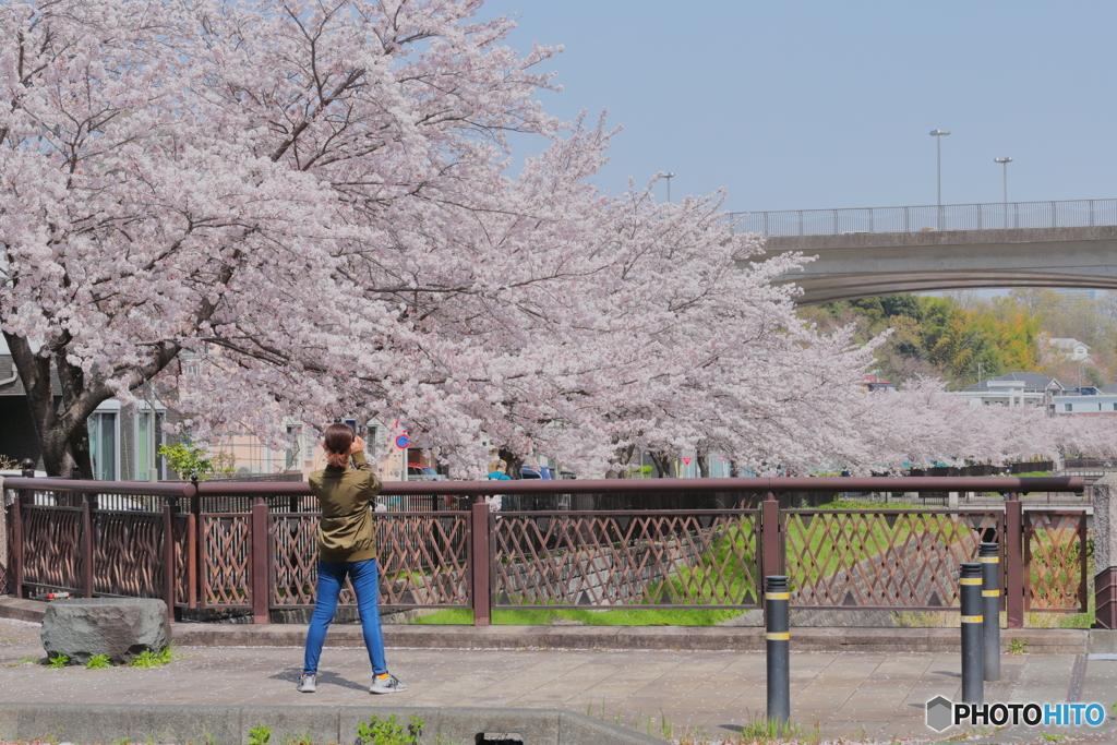 散歩~桜撮る人