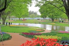 昭和記念公園にて⑦~チューリップからの