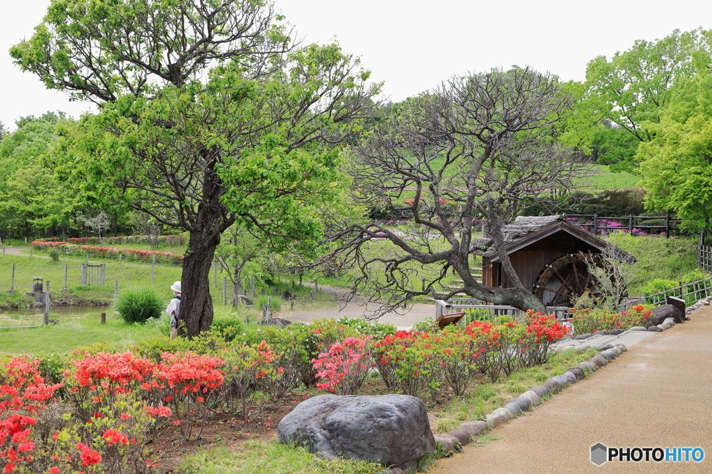 昭和記念公園にて⑤~里の春