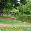 昭和記念公園にて④~池