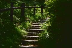 森へ続く階段