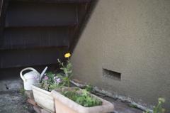 階段下の鉢植え