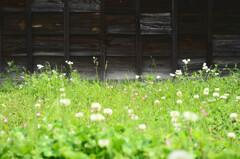 野花と下見板張り