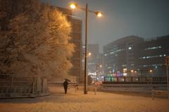 街路樹と雪