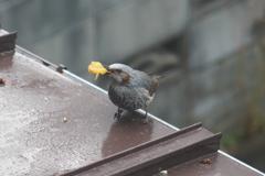 屋根で食べる2