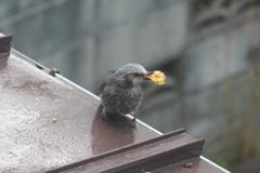 屋根で食べる