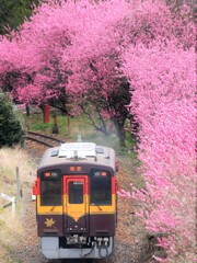 花桃カーブ