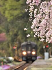 枝垂桜が咲く駅へ