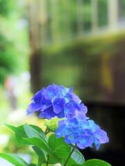 わ鐵 沿線に咲く花