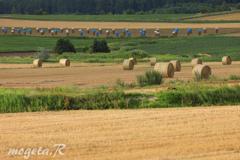 牧草と青いボウシ