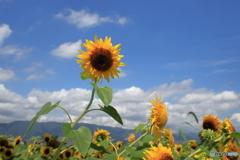 高原の夏風・地元風景