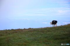 牛になりたい♪