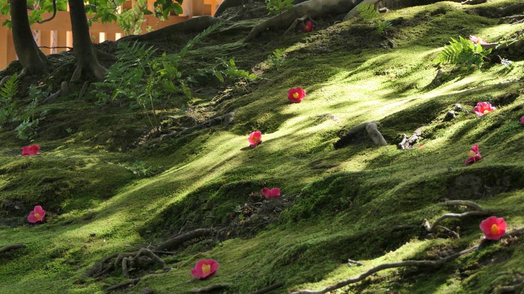 城南宮の庭園。