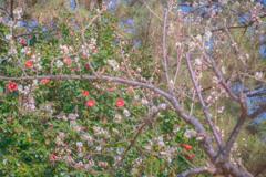 梅と山茶花