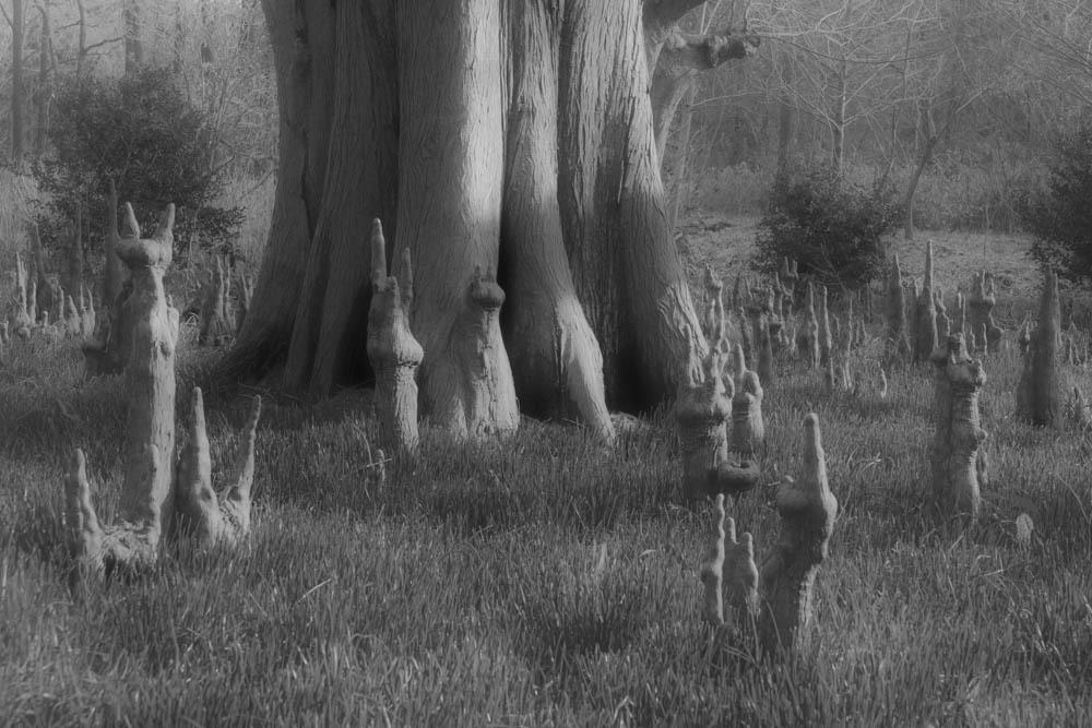 不思議な森