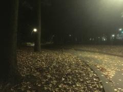 a hazy shade of autumn