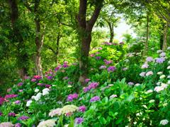 桃源郷の森
