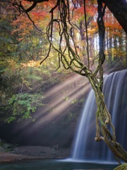 紅葉の滝に光芒