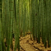 竹林の向こうに