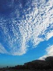 うろこ雲と鴨川と.