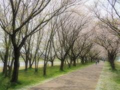 木場潟の春