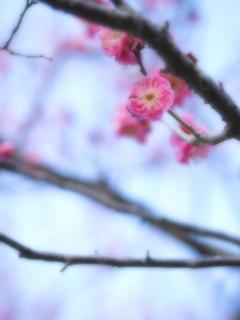 大阪はもう春?