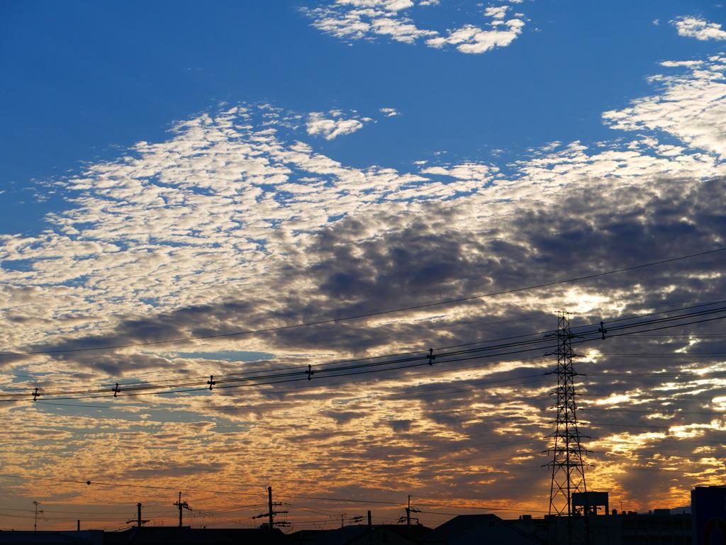 秋はイワシ雲に乗ってやって来る