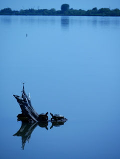 カメとトンボと木場潟と