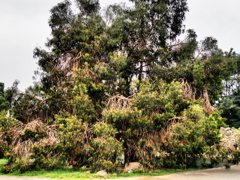 トロルな木