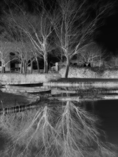 Nega Reflection