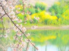 春色ソフトフォーカス