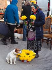 花売りと犬