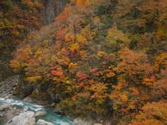 黒部川の秋