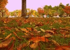 落ち葉とともに
