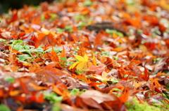 ちいさな秋 たくさんの秋