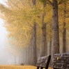 黄金色に包まれるベンチ